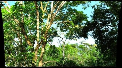 Two Iguanas, Bocas del Toro, Panama