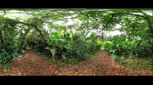Leaf Cutter Ant trail, Bocas del Toro, Panama