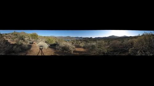 Pheonix Desert