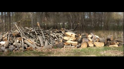The Wood Pile - 500mm Mirror Lens