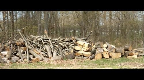 The Wood Pile - 300mm Nikkor Zoom