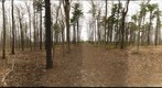Dairy Bush GigaPan - 137 - April 11 2012