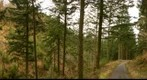 20120213 - Panorama in Lake District - Forest