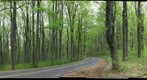 Spring Forest- Skyline Drive, Shenandoah National Park