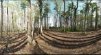 Dairy Bush GigaPan - 139 - April 25 2012
