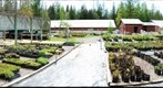 native plant nursery 2