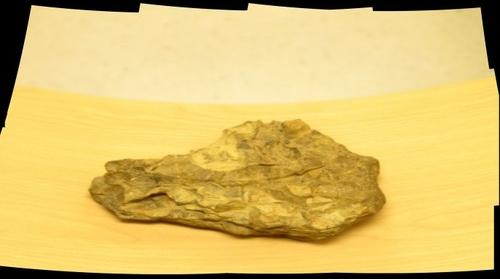 fossil from science class