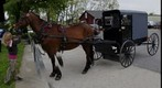 Amish Horse