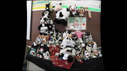 Mrs. Lydon's Cow Collection 2012