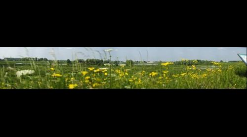 Ooij polder