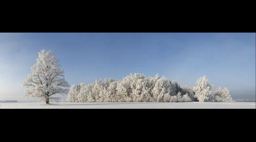 Latvia winter landscape panorama
