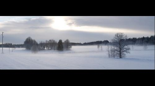 Sunlighted mist in cloudy winter evening. Riga district. Latvia.