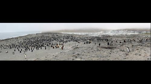 King Penguins and Elephant Seals, St Andrew Bay, South Georgia