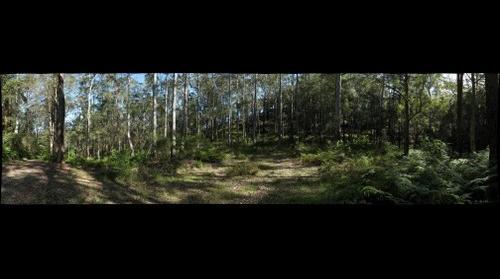 Bluegum Walk Hornsby - Saddle