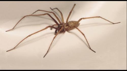 Araignée Macro