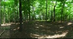 Dairy Bush GigaPan - 147 – June 20 2012