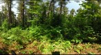 Algonquin Park - Basin Depot - Cut site - 120611