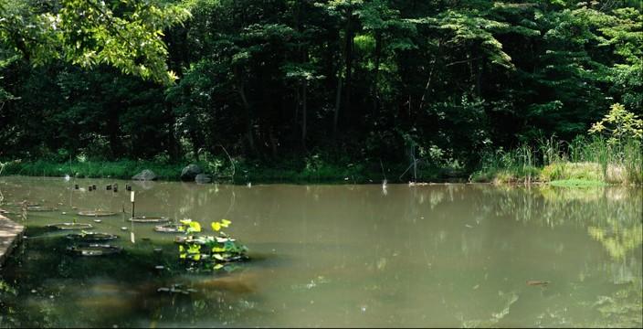 Hunting of kingfisher