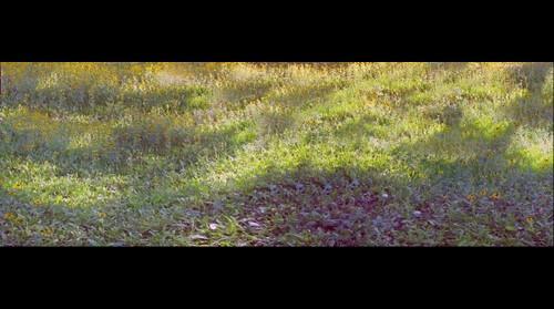 Wild Flowers (test)