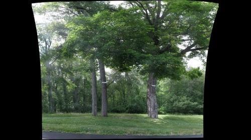 Maple Trees, West Hartford Reservoir