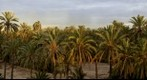 Palmeral de Elche/Palmtree forest of Elche