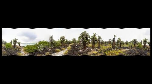 Tortuga Bay - Opuntia Cactus - Low-resolution - 360 degrees
