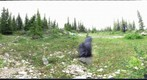 120716 - Arctic Ecology 2012 - Ramsay creek_Kelsey