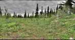 120716 - Arctic Ecology - Churchill Manitoba - Ramsay Creek - Cassie