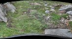 120716 - Arctic Ecology - Churchill Manitoba - Rock Bluff A Q1