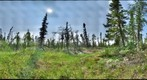 120712 - Arctic Ecology - Churchill Manitoba - Goose Creek Cabin Bog - Hayley and Cassie