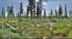 120712 - Arctic Ecology - Churchill Manitoba - Goose Creek Cabin Bog - Chris