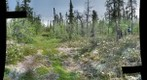 120712 - Arctic Ecology - Churchill Manitoba - Goose Creek Bog - Natalie