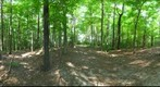 Dairy Bush GigaPan - 154 – August 08 2012