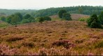 heide heath moor Pos