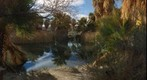 Oasis in the Coachella Valley