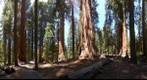 Giant Sequoia Grove, Sequoia National Park, California