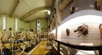 Bangor University Natural History Museum
