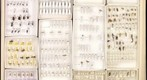 Various Hymenoptera test drawer