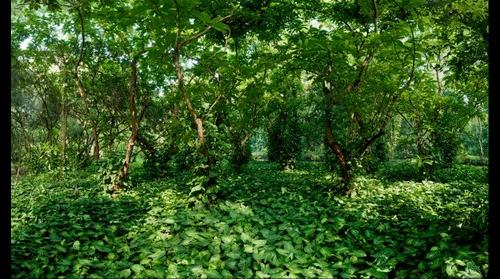 Small forest