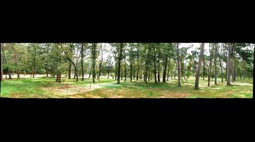 홍유능 숲