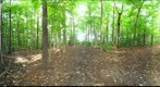 Dairy Bush GigaPan - 160  September 19 2012 