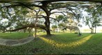 Under Live Oak Tree, Craig Park, Tarpon Springs, Florida - Full Spherical Panorama