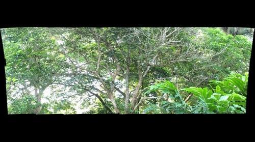 Jardim Botânico do Rio de janeiro / tucano-de-bico-preto