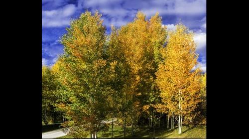 Golden Backyard