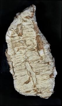 Tubestone Stromatolite