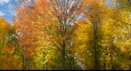 Autum leaves in High Park Toronto