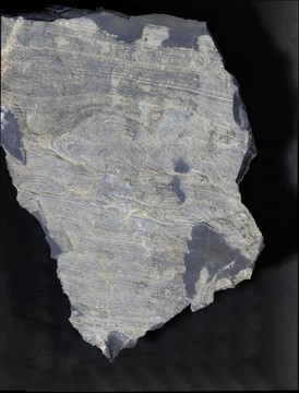 Roll Up Structures in Dolomitic Microbialaminite