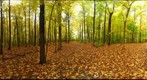 Dairy Bush GigaPan - 164 – October 17 2012