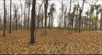 Dairy Bush GigaPan - 166 – November 2 2012