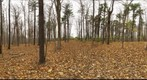 Dairy Bush GigaPan - 167 – November 07 2012